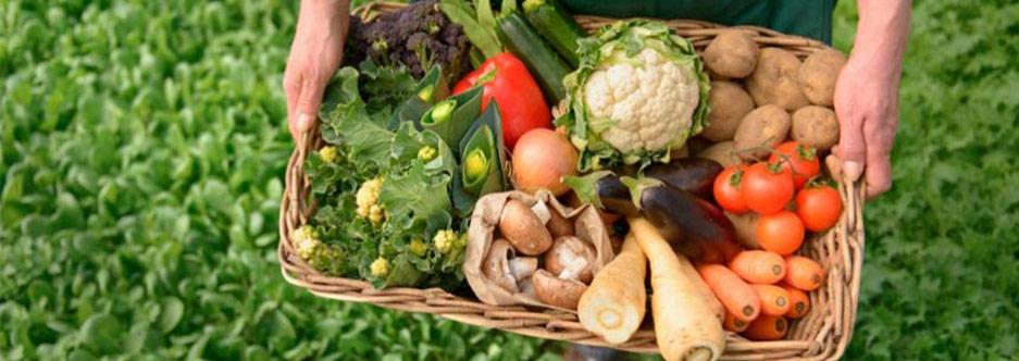 alimentacion-ecologica