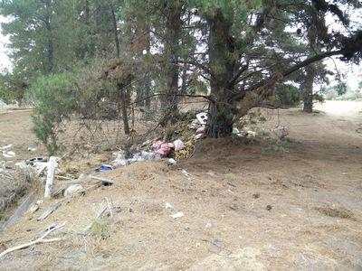 Plástico en el Bosque